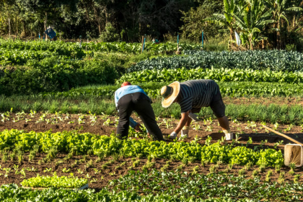 Fedeagro considera positivo que se le otrorguen créditos a productores merideños afectados por las lluvias