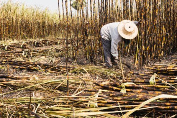Fedeagro: crisis del combustible genera caída proyectada de 91% de superficie cultivada en seis años