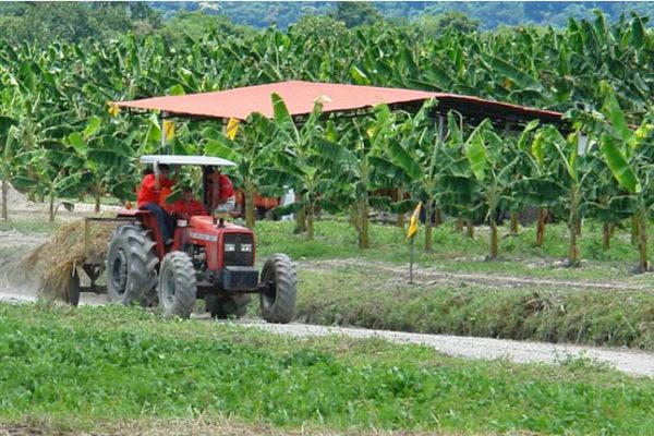 Ganaderos alertan que cada vez quedan menos productores agropecuarios en el país