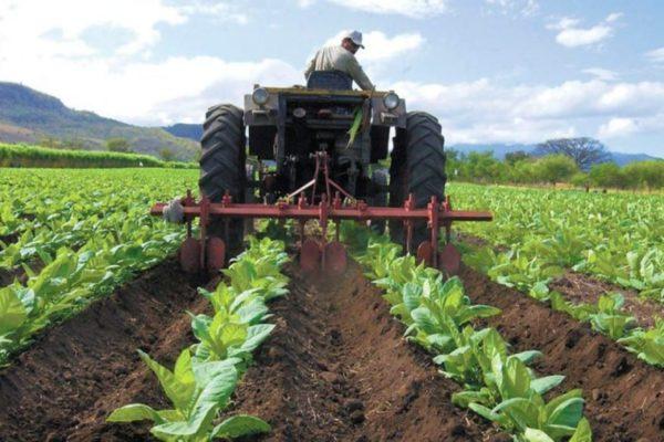Banca pública aporta el 83% del financiamiento agrícola
