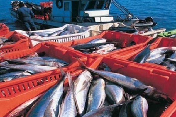 Producción del sector pesquero ha mermado 70% en 12 años