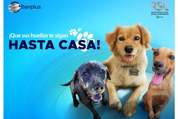 Banplus promueve en Instagram la adopción canina con «Paticas felices»