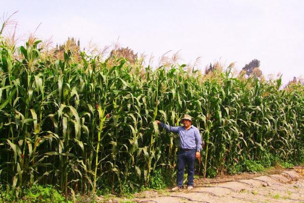 Presidente de Fedeagro afirma que producción agrícola y consumo han caído en 70%