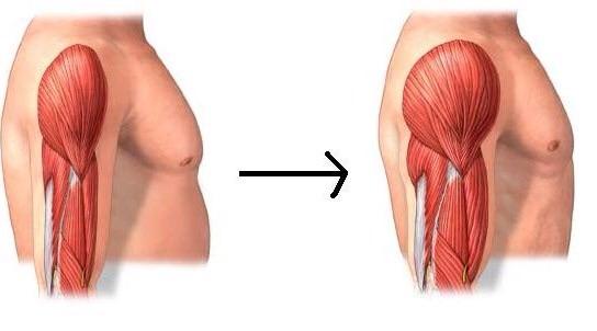 Crecimiento muscular requiere agua, nutrientes y ejercicio