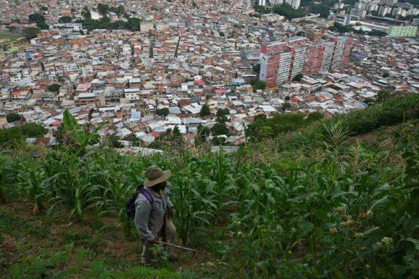 En los barrios de Caracas emergen huertos para completar la dieta