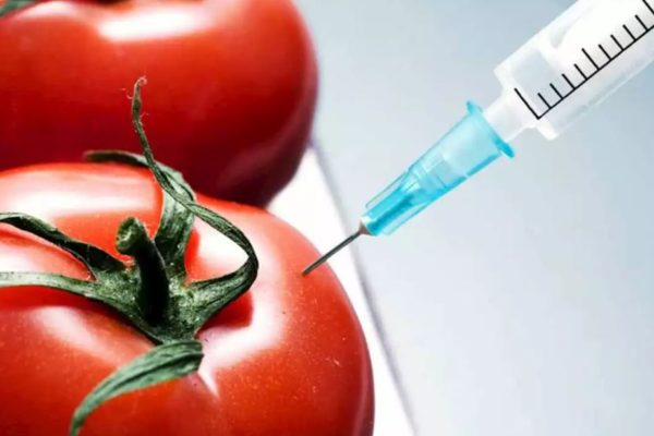 Inmunización con tomates: El proyecto para desarrollar una vacuna anticovid-19 comestible