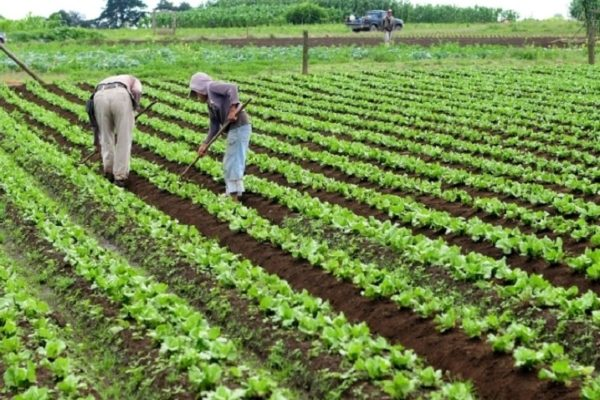 OMC llama a los países a comprometerse a que se alcance un acuerdo sobre agricultura este año