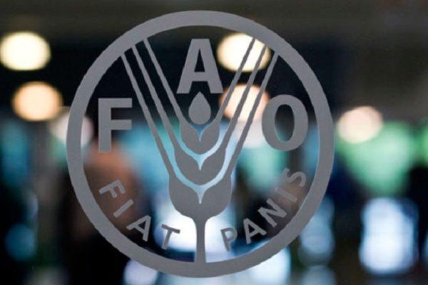 La FAO pide un enfoque global para prevenir futuras pandemias