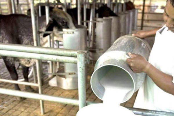 Precios subvaluados, servicios deficientes y carencia de combustible: La precaria situación de los productores de leche en Venezuela